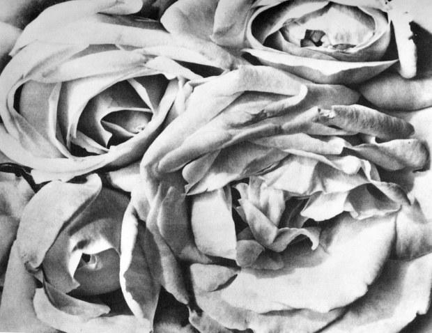 Roses, Tina Modotti, 1924